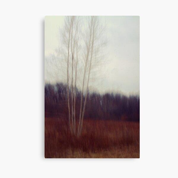 Lone Birch  Canvas Print