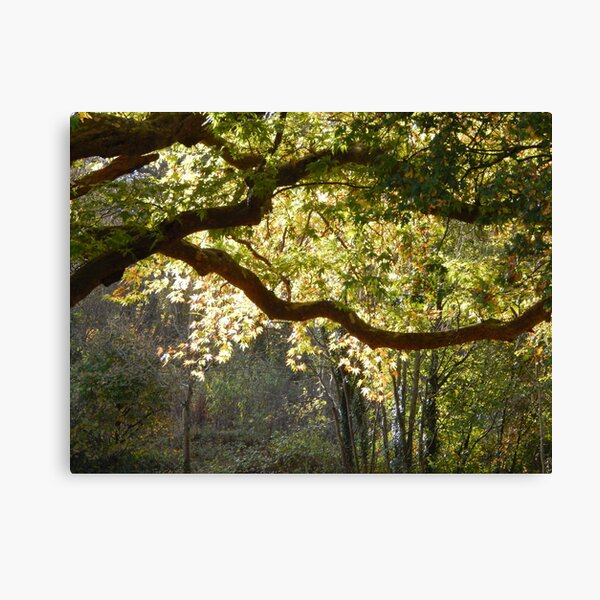 In a Sunlit Woods Canvas Print