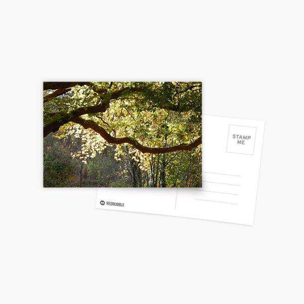 In a Sunlit Woods Postcard