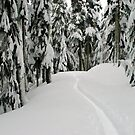 Elfin Lakes Trail Winter Edition Simplified by Michael Garson