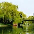 Punting, River Cam, Cambridge by artfulvistas