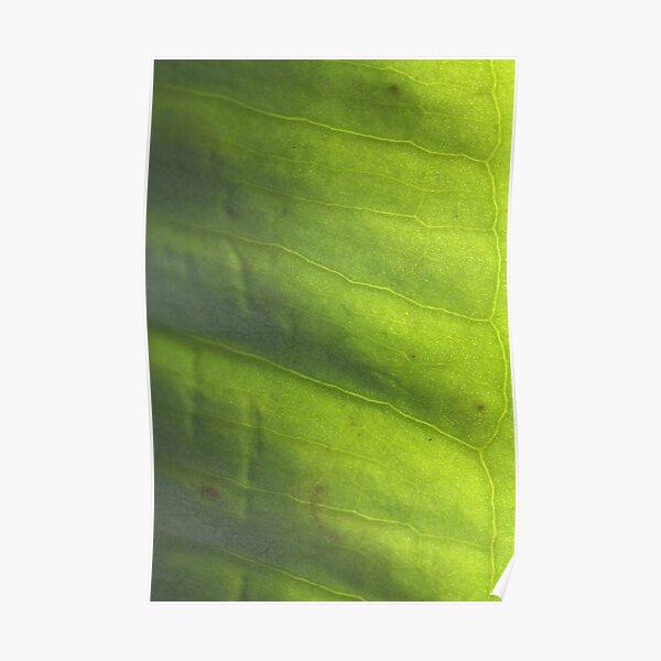 vert' Poster