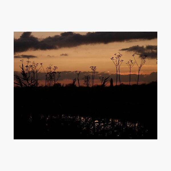Sunset seed heads Photographic Print