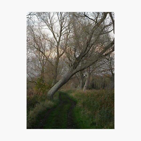 Wooded path Photographic Print