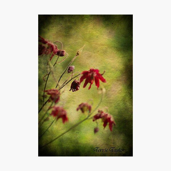 Emotion Photographic Print