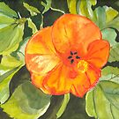 Hibiscus by Sally Griffin