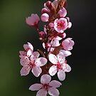 Blossoms by Virag Anna Margittai