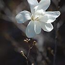 White Bokeh by Virag Anna Margittai