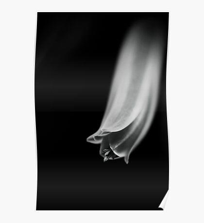 Aloe Vera Flower Poster