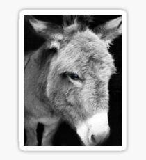 Little donkey Sticker