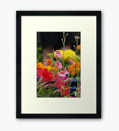 Colourful Garden Framed Print