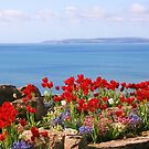 Tulips on the East Cliff, Bournemouth by RedHillDigital