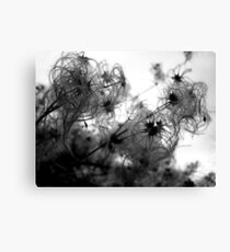 Furry Weeds Canvas Print