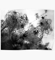 Furry Weeds Poster