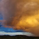 Rain Storm by Liz Worth