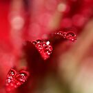 Bubbles of Red by chloemay
