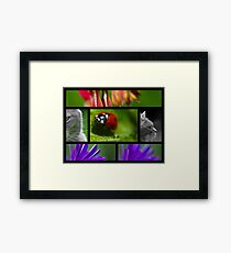Wildlife Collage Framed Print