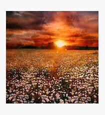 Daisies field Photographic Print
