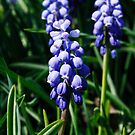 Purple Bell by Jessica Mullins-Hunter