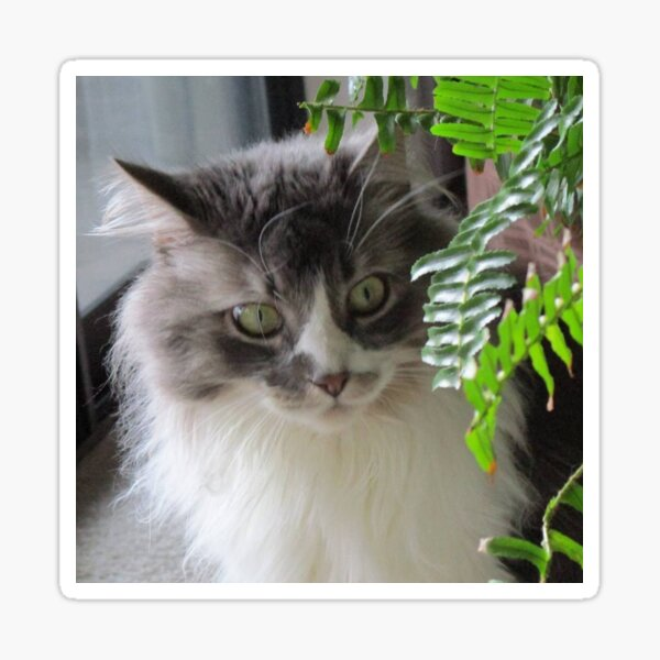 Kitty Looking Through Ferns Sticker
