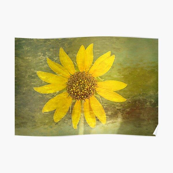 Desert Sunflower Poster