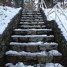 Steps at Cole's Bay by Jann Ashworth