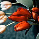 Tulips by Karen Havenaar