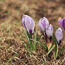 spring by Maciej Pokora
