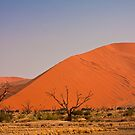 Sossusvlei trees by Owed To Nature