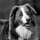 Doggie smile by Brandie1