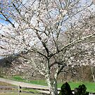 Spring Has Sprung by Hank Eder