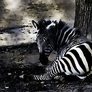 Zebra by gena44