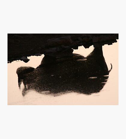 Rhino Dream Photographic Print