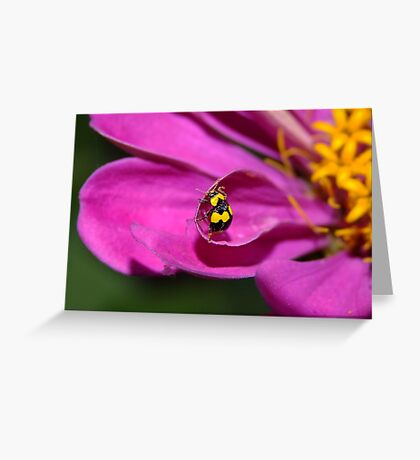 Yellow Ladybird Greeting Card