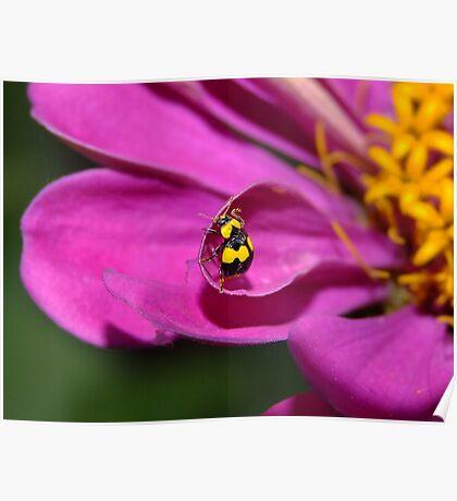 Yellow Ladybird Poster