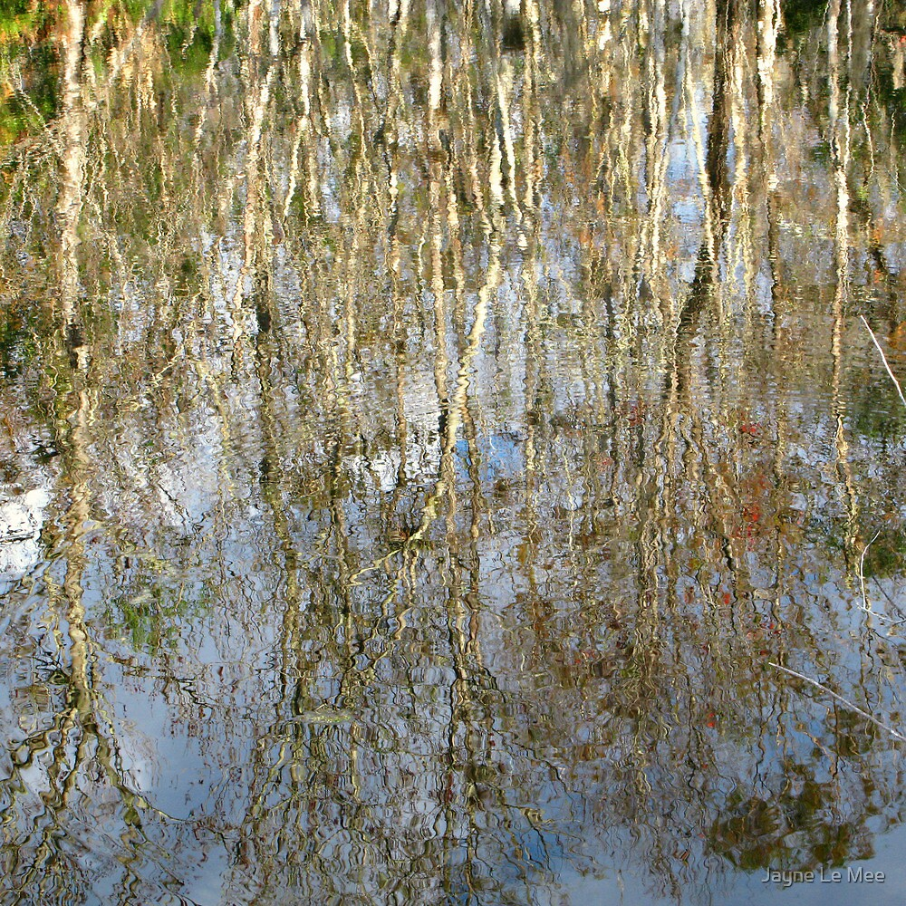 Reflection of the Everglades by Jayne Le Mee