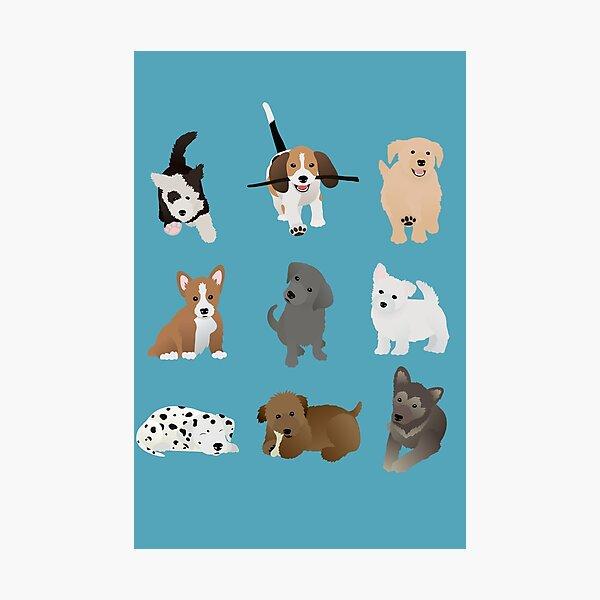 puppies (blue) Photographic Print