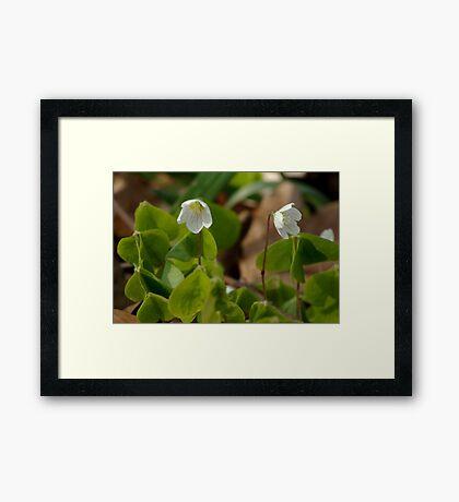 Little wood fairies  Framed Print