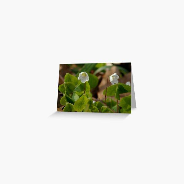 Little wood fairies  Greeting Card