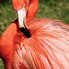 Flamingo 7 by Sheryl Unwin