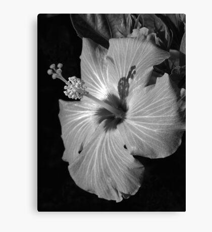 Hibiscus Black and Whitus Canvas Print