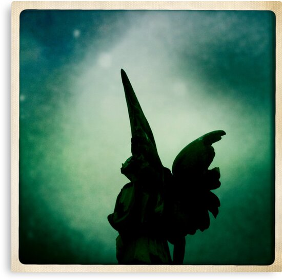 loving wings by natalie angus