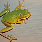 Little Green Frog by RebeccaBlackman