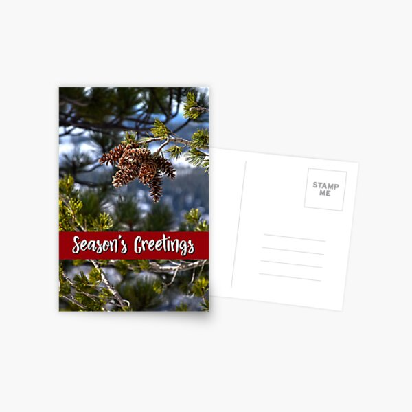 Western White Pine Holiday Card Postcard