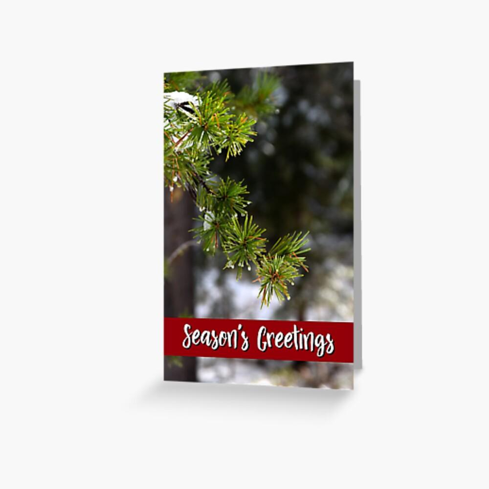 Sierra Lodgepole Pine Holiday Card Greeting Card