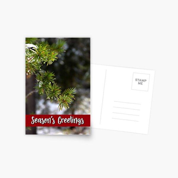 Sierra Lodgepole Pine Holiday Card Postcard