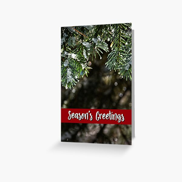 White Fir Holiday Card Greeting Card