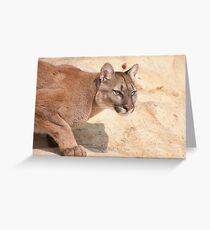 Cougar/Puma  _(Puma Concolor)_ Greeting Card