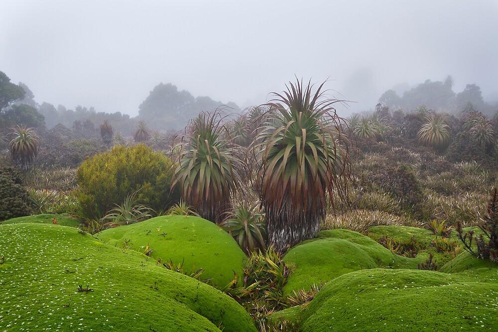 Cushion Plant and Pandanus by Mike Calder