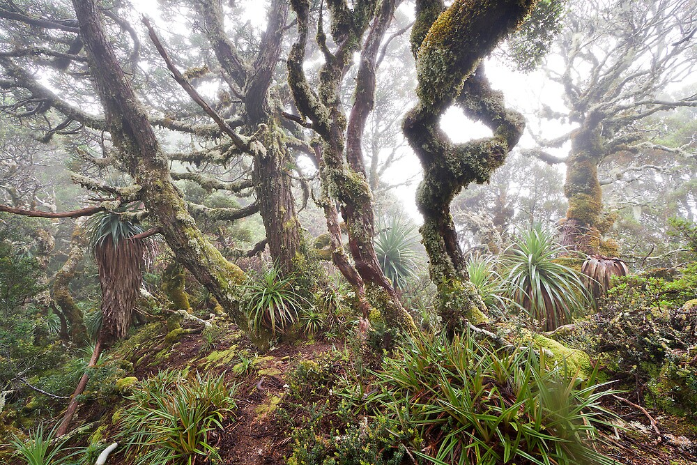 King Billy Forest in Cloud by Mike Calder